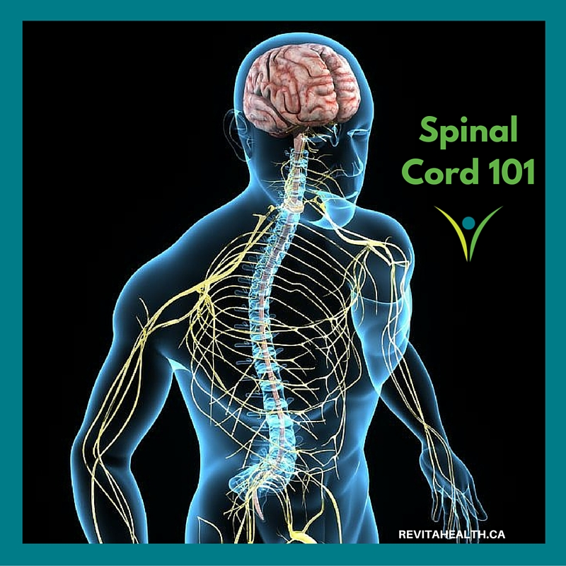 Spinal Cord 101